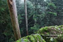 Forêt du Vignage, Forêt d'Ecouves