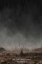 De brumes et de bois, Forêt d'Ecouves