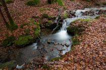 Ruisseau de Pierre-chien, Forêt d'Ecouves
