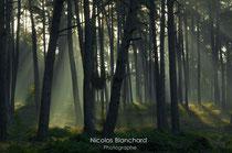Lumières Sylvestres, Forêt d'Ecouves