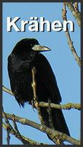 Krähenabwehr mit Bird Gard (Link)