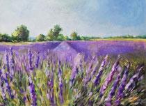 Luberon, Lavendelfeld  Öl_Lwd. 50x70cm