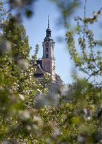 Wallfahrtskirche Birnau im Blütenmeer 170430-060