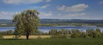 Höri, blühender Obstbaum mit Blick auf die Halbinsel 170410-260