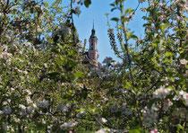 Wallfahrtskirche Birnau im Blütenmeer 170430-058