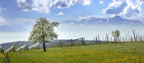 Friedrichshafen, Ausblick über blühende Obstbäume auf den Säntis 180419