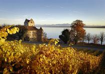 Burg Meersburg im herbstlichen Weinlaub 151108-017V