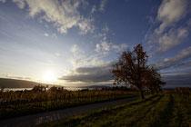 Herbstliche Bäume auf der Reichenau 191112-023