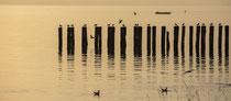 Altnau Holzpoller in der Morgendämmerung 201009-135P