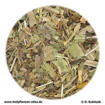 Spitzwegerichblätter (Plataginis lanceolatae folium)