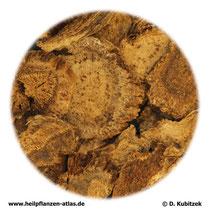 Himalayaschartenwurzel (Aucklandiae radix). TCM-Name: Muxiang.