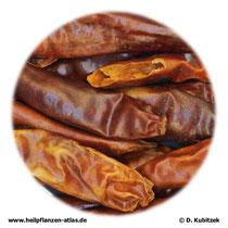 Cayennepfeffer (Capsici fructus)