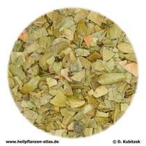Bärentraubenblätter (Uvae ursi folium)