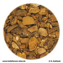 Rhabarberwurzel (Rhei radix)