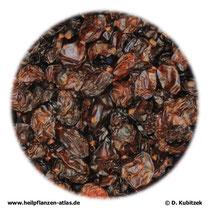 Gewöhnliche Berberitze (Berberis vulgaris), getrocknete Früchte (Beeren)