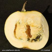 Steirischer Ölkürbis (Cucurbita pepo var. styriaca), aufgeschnitten