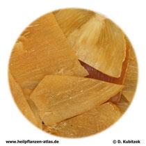 Gastrodienwurzelstock (Gastrodiae rhizoma; TCM: Tianma)