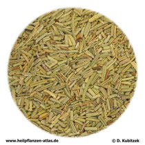 Rosmarinblätter (Rosmarini folium)