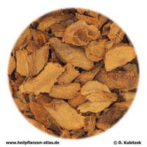 Galgantwurzelstock (Galangae rhizoma)