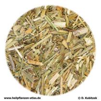 Hirtentäschelkraut (Bursae pastoris herba)