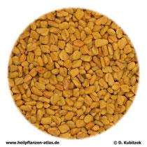 Bockshornsamen (Trigonellae foenugraeci semen)