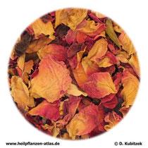 Rosenblütenblätter (Rosae flos)