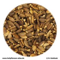 Mariendistelfrüchte (Silybi mariani fructus)