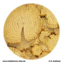 Clematis-armandii-Spross (Clematidis armandii caulis). TCM-Name: Chuanmutong.