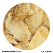 Angelica-dahurica-Wurzel (Angelicae dahuricae radix). TCM-Name: Baizhi.
