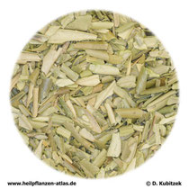 Oelbaumblätter (Oleae folium)