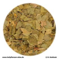 Ginkgoblaetter (Ginkgo folium)