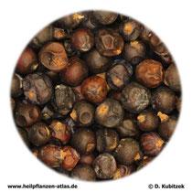 Wacholderbeeren (Juniperi galbulus)