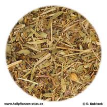 Quendelkraut (Serpylli herba)