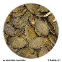 Kürbissamen (Cucurbitae semen)