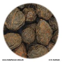 Sägepalmenfrüchte, ganz (Sabalis serrulatae fructus)