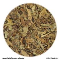 Orthosiphonblätter (Orthosiphonis folium)