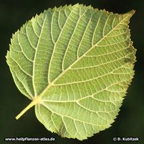 Die Unterseite eines Sommerlindenblattes