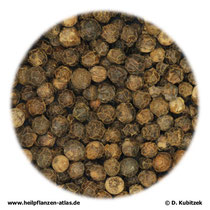 Pfeffer (Piperis fructus)