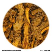 Goldfadenwurzelstock (Coptidis rhizoma). TCM-Name: Huanglian