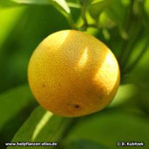 Mandarine Frucht