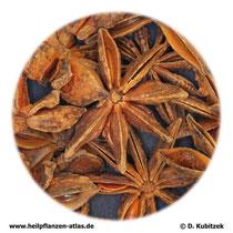 Sternanis (Anisi stellati fructus)