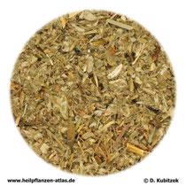 Gänsefingerkraut (Anserinae herba)