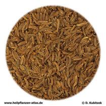 Kümmel (Carvi fructus)