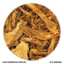Angelica-sinensis-Wurzel (Angelicae sinensis radix). TCM-Name: Danggui.