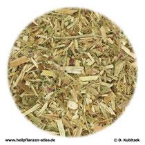 Kleinblütiges Weidenröschenkraut (Epilobii parviflori herba)