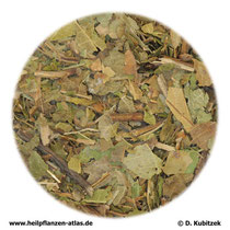 Walnussblätter (Juglandis folium)