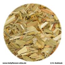 Haferkraut (Avenae herba)