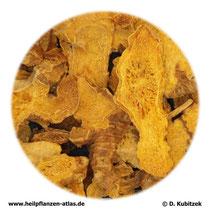 Leopardenblumenwurzelstock (Belamcandae chinensis rhizoma); TCM-Name: Shegan