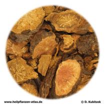 Großer-Wiesenknopf-Wurzel (Sanguisorbae radix). TCM-Name: Diyu.