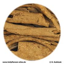 Stachelpanaxwurzelrinde (Acanthopanacis gracilistyli cortex). TCM-Name: Wujiapi